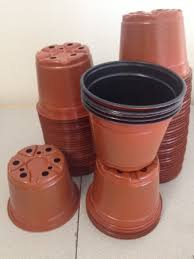 ... 6 Inch Pots (Qty.50) Azalea Flower Pots Garden Pots, Greenhouse Supplies