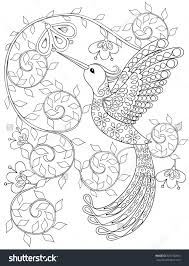 Small Picture Emejing Hummingbird Coloring Sheet Pictures Coloring Page Design