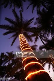 29 Best Hawaiian Christmas Images On Pinterest  Christmas Decor Christmas Tree Hawaii