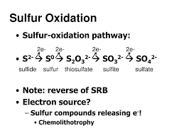 Ppt Case Study Sulfur And Iron Oxidizing Bacteria