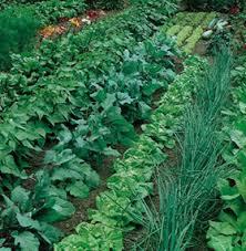 Crop Rotation Chart Vegetable Gardening Using Crop Rotation In Home Vegetable Garden Wisconsin