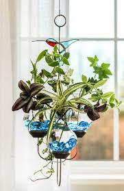 triple bird spiderplant hanging water garden