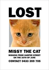 Missing Cat Poster Template Missing Cat Flyer Template Reward Poster Pics Templates For Flyers