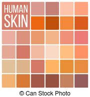 Vector Human Skin Color Palette Swatches Eps Vector Human