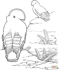 Small Picture Guianan Cock of the Rock coloring page Free Printable Coloring Pages