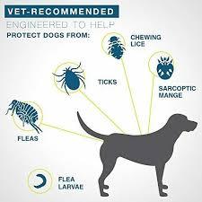 Seresto Flea And Tick Collar Tick Prevention For Small Dogs Under 18 Lbs Vova