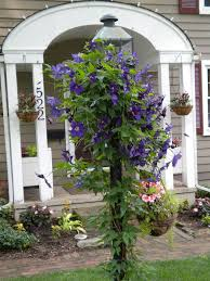 Another Great Way To Use Clematis Let It Climb Up A Light