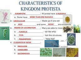 Ppt Characteristics Of Kingdom Protista Powerpoint
