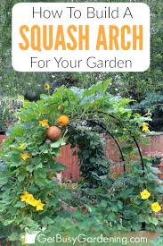 build this gorgeous squash arch to add beauty and height to your vegetable garden my