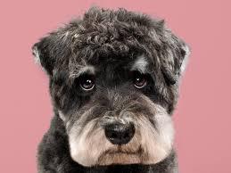 puppy style pet photographer grace chon