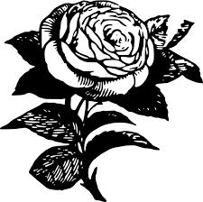 black rose flower drawing black and white