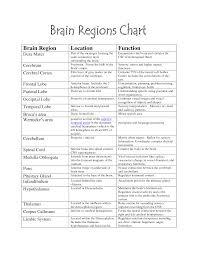 Brain Functions Chart Brain Parts Brain Parts Ap