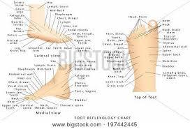 Reflexology Chart Top Of Foot Reflexology Chart Vector Photo Free Trial Bigstock