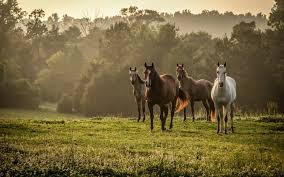 Desktop Wallpaper Horses 54 Pictures