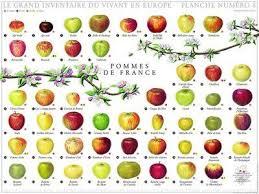 Types Of Apples Chart Apple Varieties Apple Varieties Apple Types Nature Posters