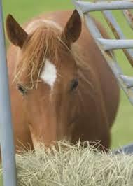 When Flexible Feeding Schedules Make Sense The Horse