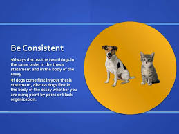 top tips for writing an essay in a hurry dogs vs cats contrast dogs vs cats contrast essay