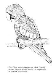 Vierwielaandrijving wordt in serieproductie genomen met de komst van de audi quattro. Ausmalbilder Schwer Vogel Ausmalbilder Ausmalbilder Vogel Ausmalbilder Zum Ausdrucken