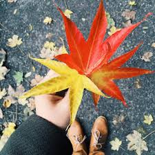 Image result for autumn pictures