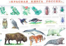 райское настроение реферат о растениях о красной книги казахстана реферат о растениях о красной книги казахстана