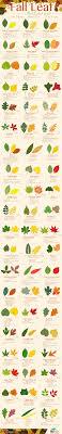 Fall Leaf Identification Guide Mjjsales Com