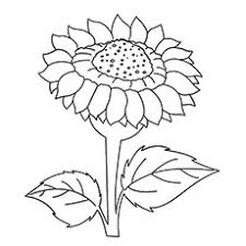 Dafna Sunflower 15 beautiful sunflower coloring pages for your little girl on sunflower pictures for coloring