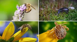 featured image beneficial insects and how they support your garden