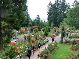 our gardens are the oldest continuously operating public rose test gardens in the united states