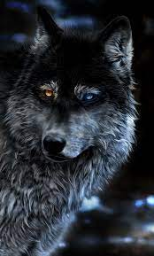 Wolf 4K HD Desktop Wallpaper for 4K ...