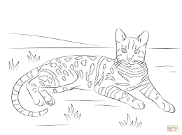 Brown Spotted Tabby Bengal Cat coloring page | Free Printable ...