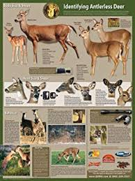 Whitetail Jawbone Aging Chart Amazon Com Deer Age Identification Poster Prints Posters