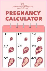 Pregnacy Clander Pregnancy Calendar And Pregnancy Calculator Womens Health Clinic