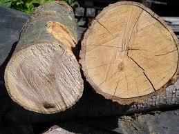 Green Wood Wikipedia