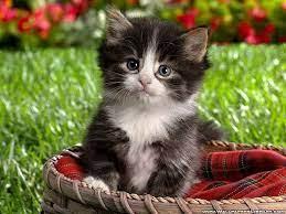 Amusing Cute Kitten 图片Excellent Cute ...