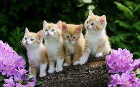 cute kittens playing wallpaper.  Playing Curious Kittens Wallpaper U2013 Download With Cute Playing 4