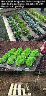 great ways to grow a small vegetable garden