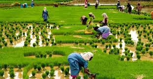 importance of agriculture in short essay for students and  agriculture