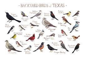 Texas Backyard Birds Field Guide Art Print Bird Poster
