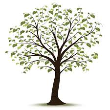 Family Tree Tree Clip Art Family Tree Family Tree Drawing Family Tree