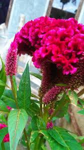 beautiful flower of pelica steemit