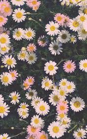 iphone 6 wallpaper floral. Unique Wallpaper Daisies IPhone Wallpaper HD Inside Iphone 6 Floral O