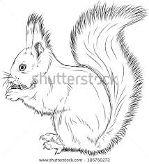 Small Picture Squirrel Outline Stock Images Royalty Free Images Vectors