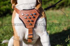 small dog harness for beagle