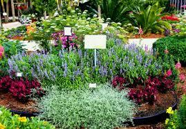 plant harmonious colors small space cut flower garden ideas costa farms cutting