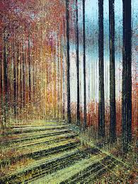 <b>Afternoon</b> Light Through <b>Forest</b> Trees by Marc Todd (2019 ...