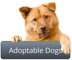 humane society dogs for adoption. Adopt Pet To Humane Society Dogs For Adoption