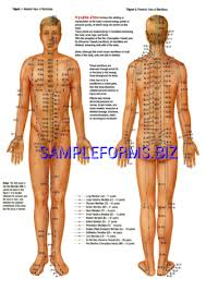Pressure Point Charts Free Pressure Point Chart 3 Pdf Free 16 Pages