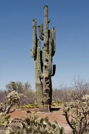 4 Oldest Cacti In The World Oldest Org