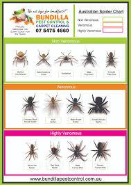 Spider Identification Chart Australia Identification Online Charts Collection
