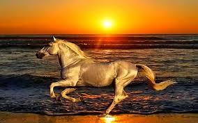 horses running in the sunset. Interesting Horses Sunset Beach Animals Shore Horses Running 1280800  Wallpaper_wwwwallpaperhicom_33 In Horses Running The Sunset I